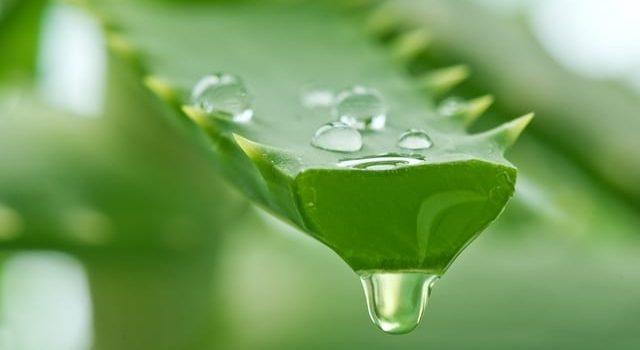 remédios naturais para queda de cabelo