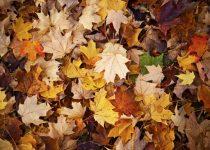 Queda de cabelo no outono